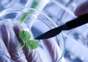 Алтайские ученые разрабатывают инновационные продукты питания и технологии для рынка FoodNet