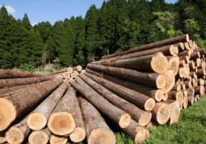 На совещании в Башкирии обсудили вопросы лесного комплекса Приволжья