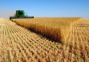 Ученые в Башкирии разработали технологию повышения урожайности зерна на 15-25%